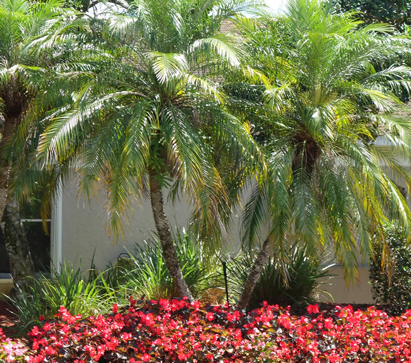 Lawn Sprinkler Repair West Palm Beach Evergreen Sprinkler and Landscape Services West Palm