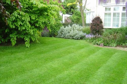 evergreen-lawn