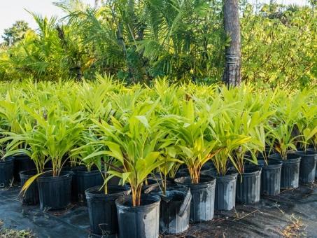 EvergreenLandscapingPlants